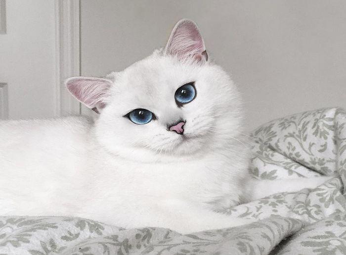 Zbog čega mačke previše pavaju?