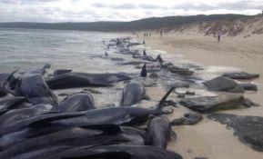 Od 150 nasukanih kitova u Australiji, samo šest preživelo