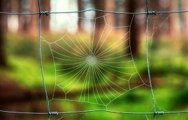 VIDEO: Paukova mreža - skoro savršeno delo prirode