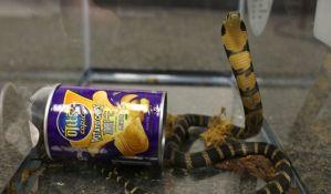 FOTO: Carinici u kutiji za čips našli tri kobre