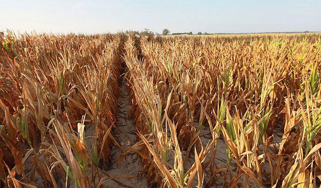 Suša već zaboravljena, obesparen seljak ne može da seje