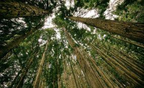 Poljska tvrdi da će poštovati naredbu EU da ne seče jedinu evropsku prašumu