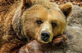 Francuska hoće da pusti dve medvedice u Pirineje, stočari protiv
