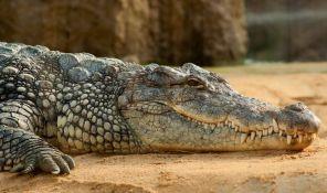 Rojters pisao o 80-ogodišnjem krokodilu Muji iz beogradskog zoo vrta