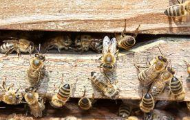 Novi pesticidi opasni po pčele kao i stari