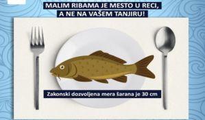 Neodgovorni ribolov ugrozio riblji fond u Srbiji