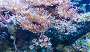Izdvojeno pola milijarde dolara za zaštitu Velikog koralnog grebena