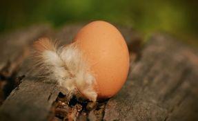 Naučnici odgovorili na pitanje šta je starije: kokoška ili jaje