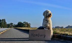 Šta sve treba da znate ako vodite psa na put