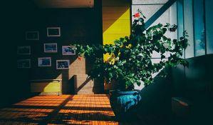 Sobne biljke opasne po zdravlje