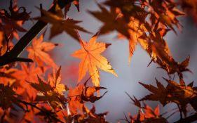 Počela je jesen