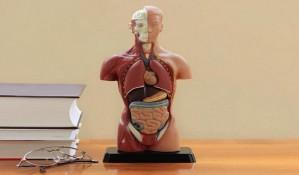 Nepotrebni delovi ljudskog tela