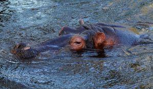 Turista preminuo nakon napada nilskog konja u Keniji