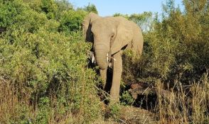 Sud odbio zahtev da se slonovima dodeli status osobe