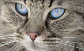 Zašto mačke imaju vertikalne zenice?