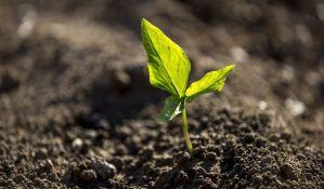 Zbog suše, stočari strepe i od aflatoksina