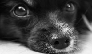 Psi prisustvovali izložbi namenjenoj samo njima