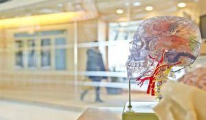 Koliko se brzo obnavljaju pojedini organi