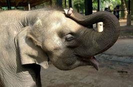 Advokat traži da se slonicama prizna status ličnosti