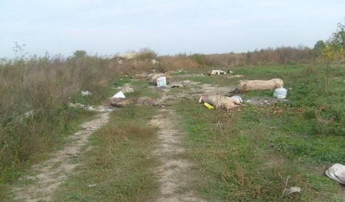 Bački Brestovac: Leševi životinja ponovo u ataru nadomak kuća