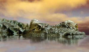 Žena poginula štiteći psa od aligatora