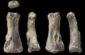 Ljudska kost stara 85.000 godina pronađena u Saudijskoj Arabiji