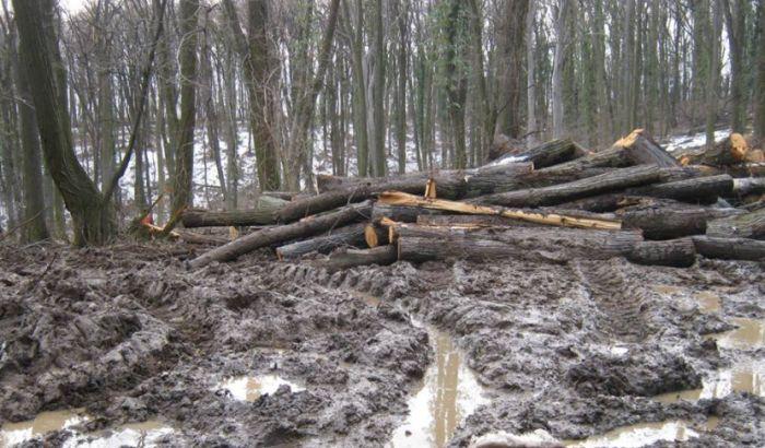 Seča drveća na Fruškoj gori zbog starosti, planinari se bune