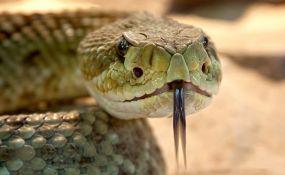 Ujela ga zmija nakon što joj je odsekao glavu