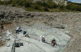 Fosil džinovskog slepog miša pronađen na Novom Zelandu