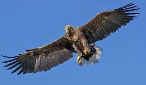 VIDEO: Borba orlova i dronova na nebu