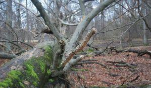 Sedam puta veća šteta u vojvođanskim šumama zbog nepogoda