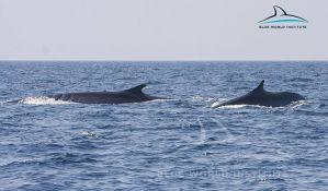 Dva velika kita kod Malog Lošinja