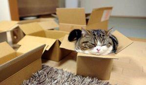 Objašnjeno zašto mačke ne mogu da odole nacrtanim kvadratima i kutijama