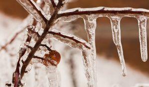Padavine i mraz naneli ogromnu štetu voćnjacima