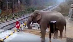 VIDEO: Inteligentni slon u saobraćaju