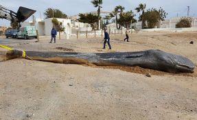 Kit uginuo od ogromne količine smeća u želucu