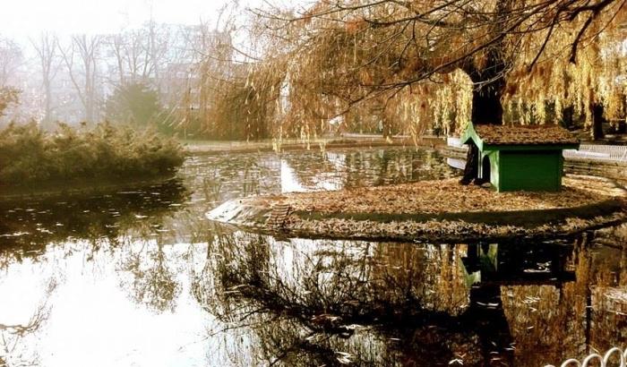 Dunavski park ove godine bez labudova