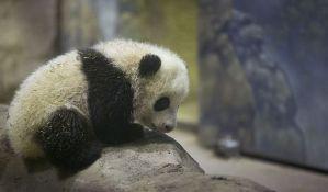 Bebu pande avionom sele iz Vašingtona u Kinu