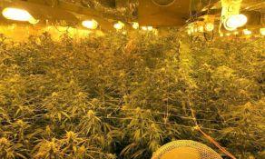 Novosađanin u grupi koja je kod Frankfurta gajila marihuanu i prodavala je širom Evrope