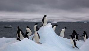 Čak 40. 000 pingvina uginulo od gladi na Antarktiku