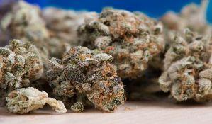Srbobran: U kući proizvodio marihuanu za prodaju