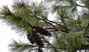 SAD: Drveće se spontano seli na sever i zapad