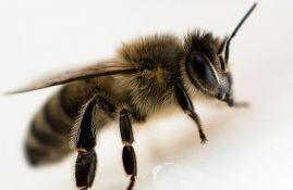 VIDEO: Ogroman roj pčela paralisao saobraćaj u Londonu
