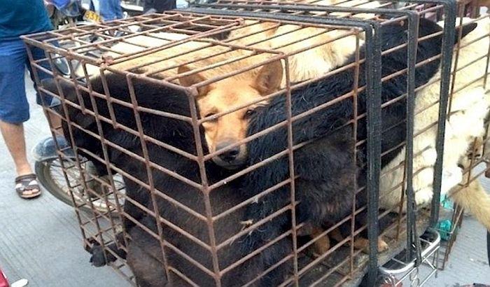 Kinezi zabranjuju prodaju psećeg mesa na zloglasnom festivalu