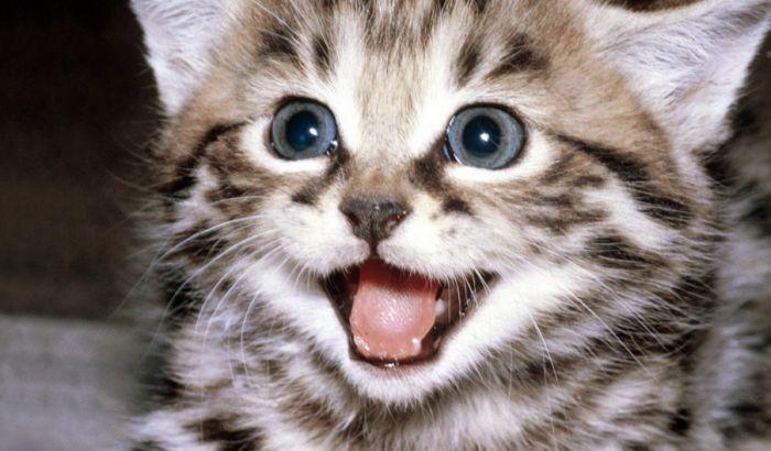 Novi Sad tuže i zbog ujeda mačaka