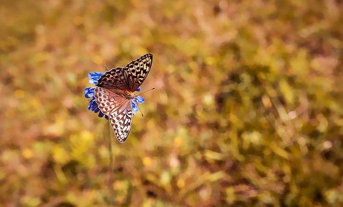 Naučnici zabrinuti: Sve manje letećih insekata