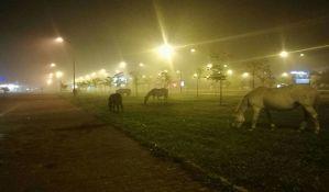 FOTO: Konji šetali u magli na Novom naselju