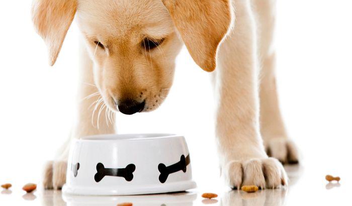 Ove namirnice psi nikada ne bi trebalo da jedu