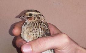 Srpsko-hrvatski tim prvi put učestvuje u takmičenju u posmatranju ptica