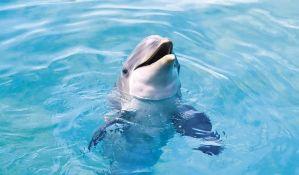 FOTO: Studenti plesali sa mrtvim delfinom u naručju